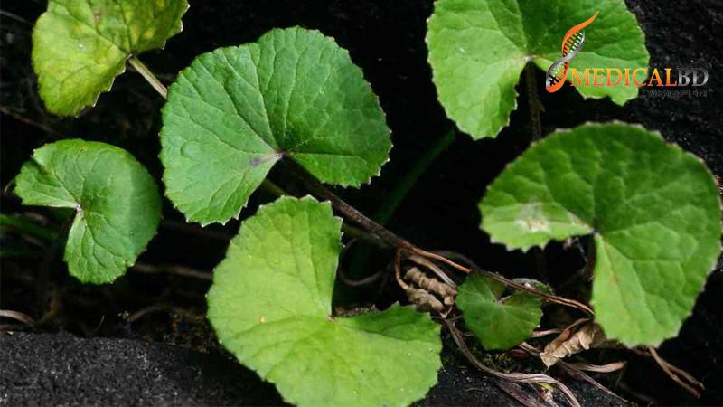 Thankuni leaf