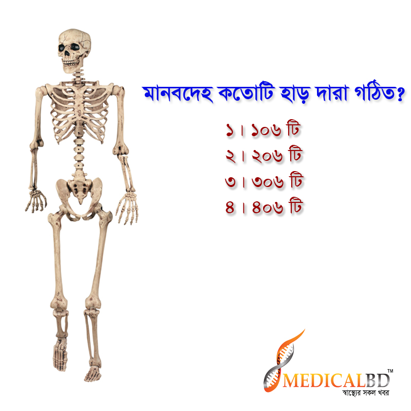 lifesize-poseable-skeleton